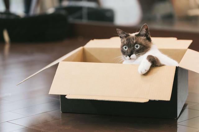 進撃の猫の写真