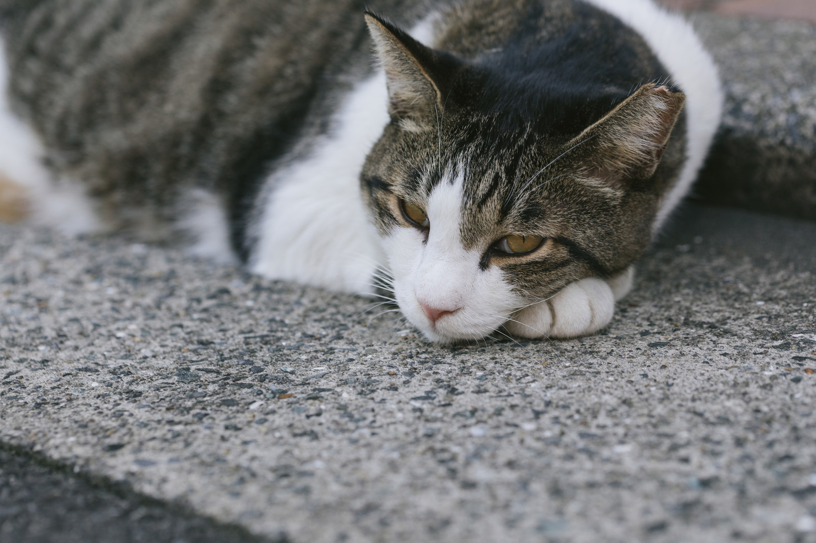 「軽蔑の眼差し猫」
