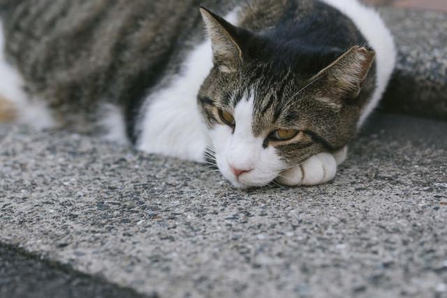軽蔑の眼差し猫の写真