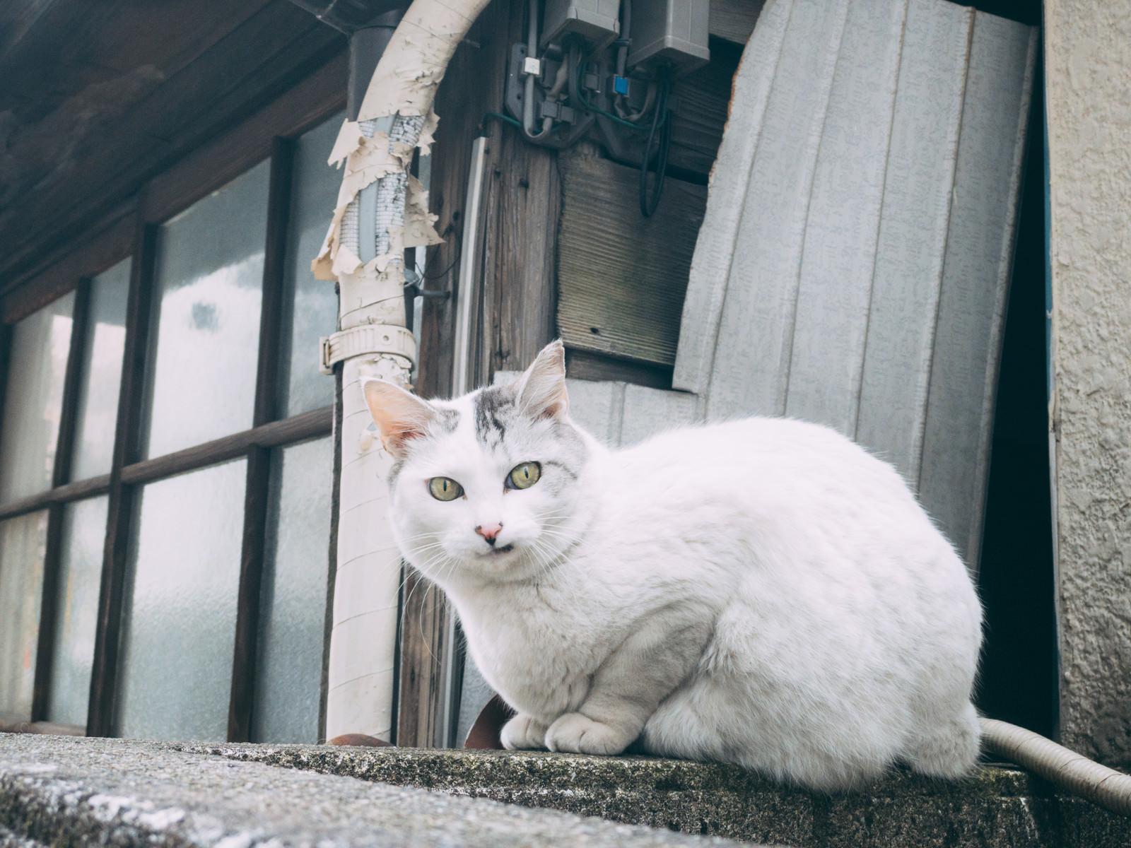 「餌をチラつかせやがって 許さんぞ!(猫)」の写真
