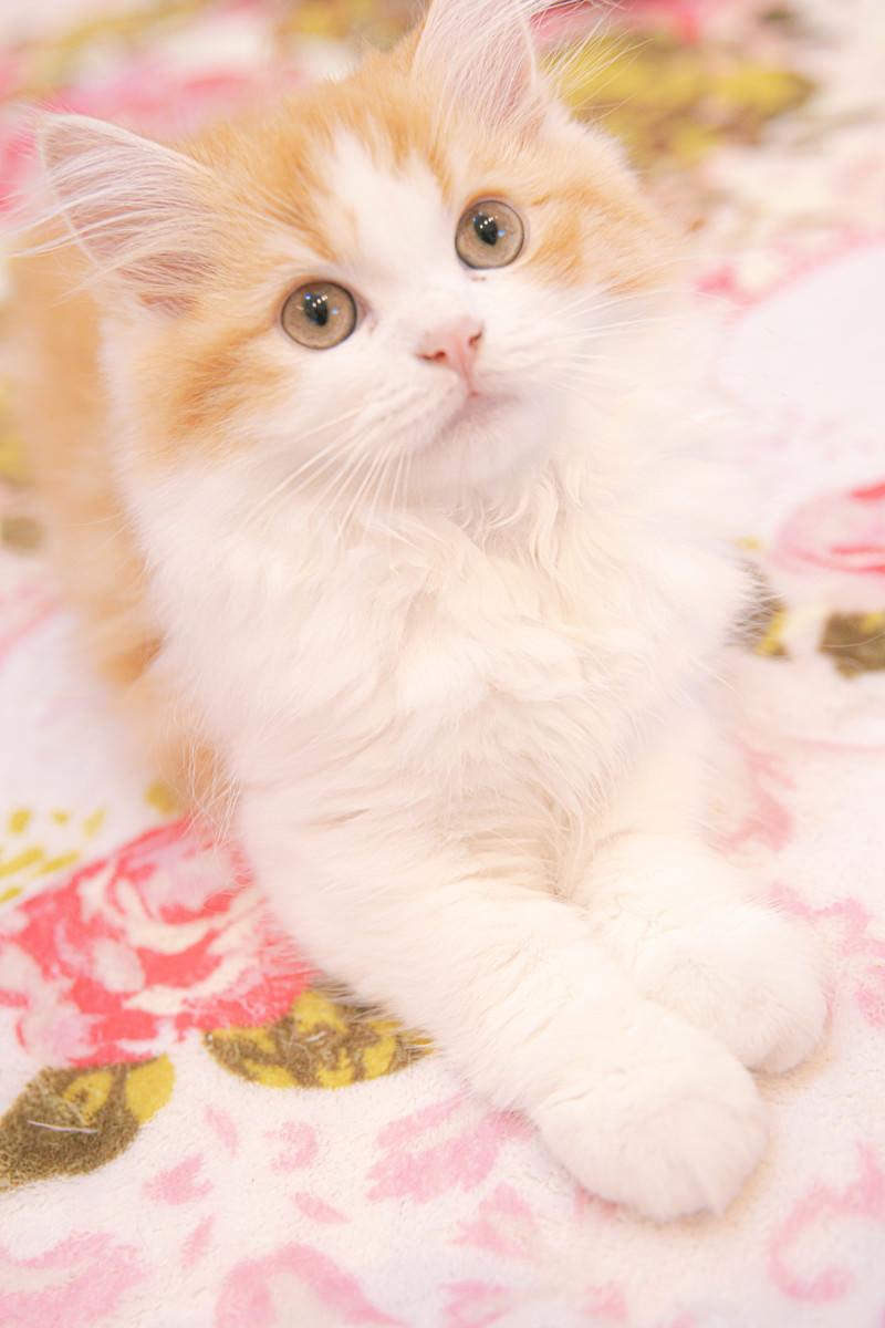 「上を見上げる猫ちゃん」の写真