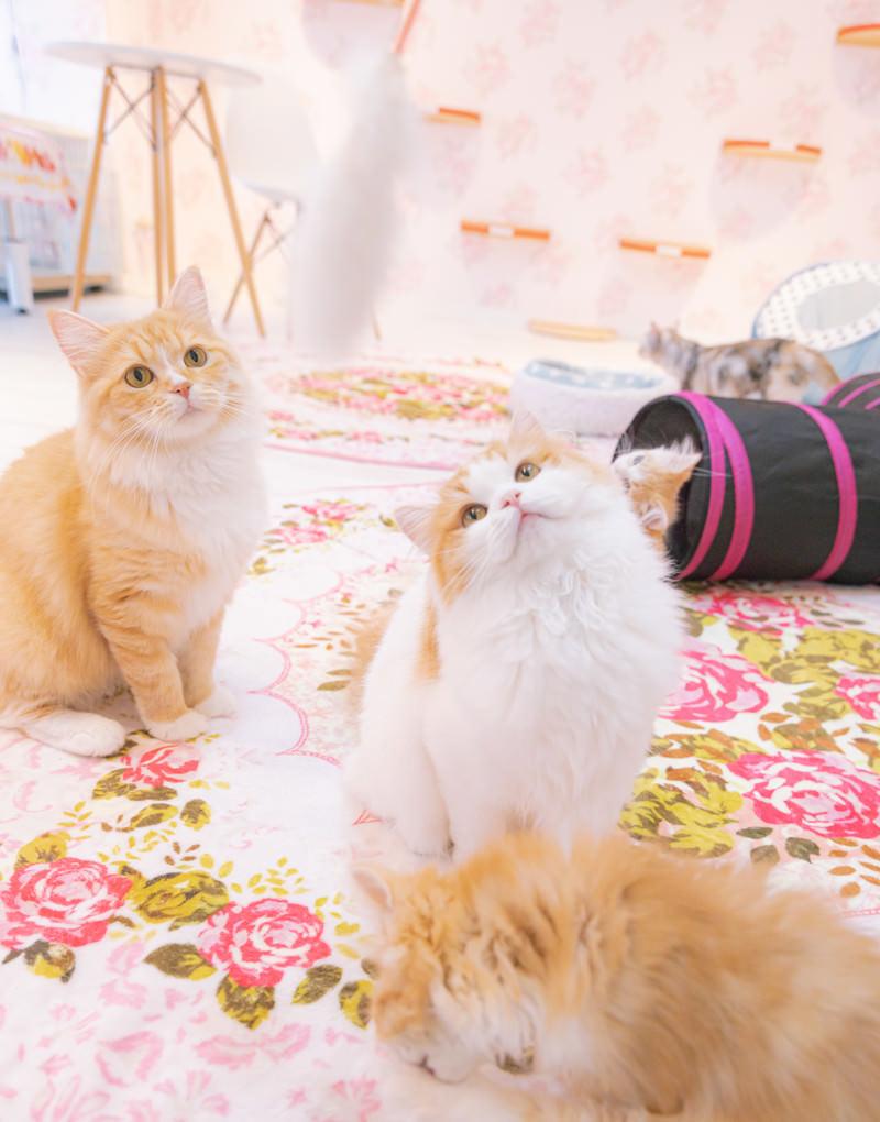 「おもちゃで猫たちを釣る」の写真