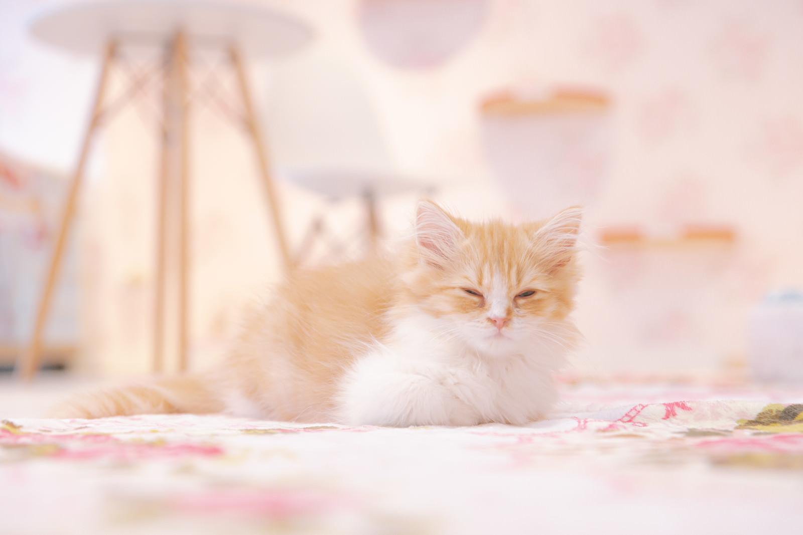「薄目でこちらを見る子猫」の写真