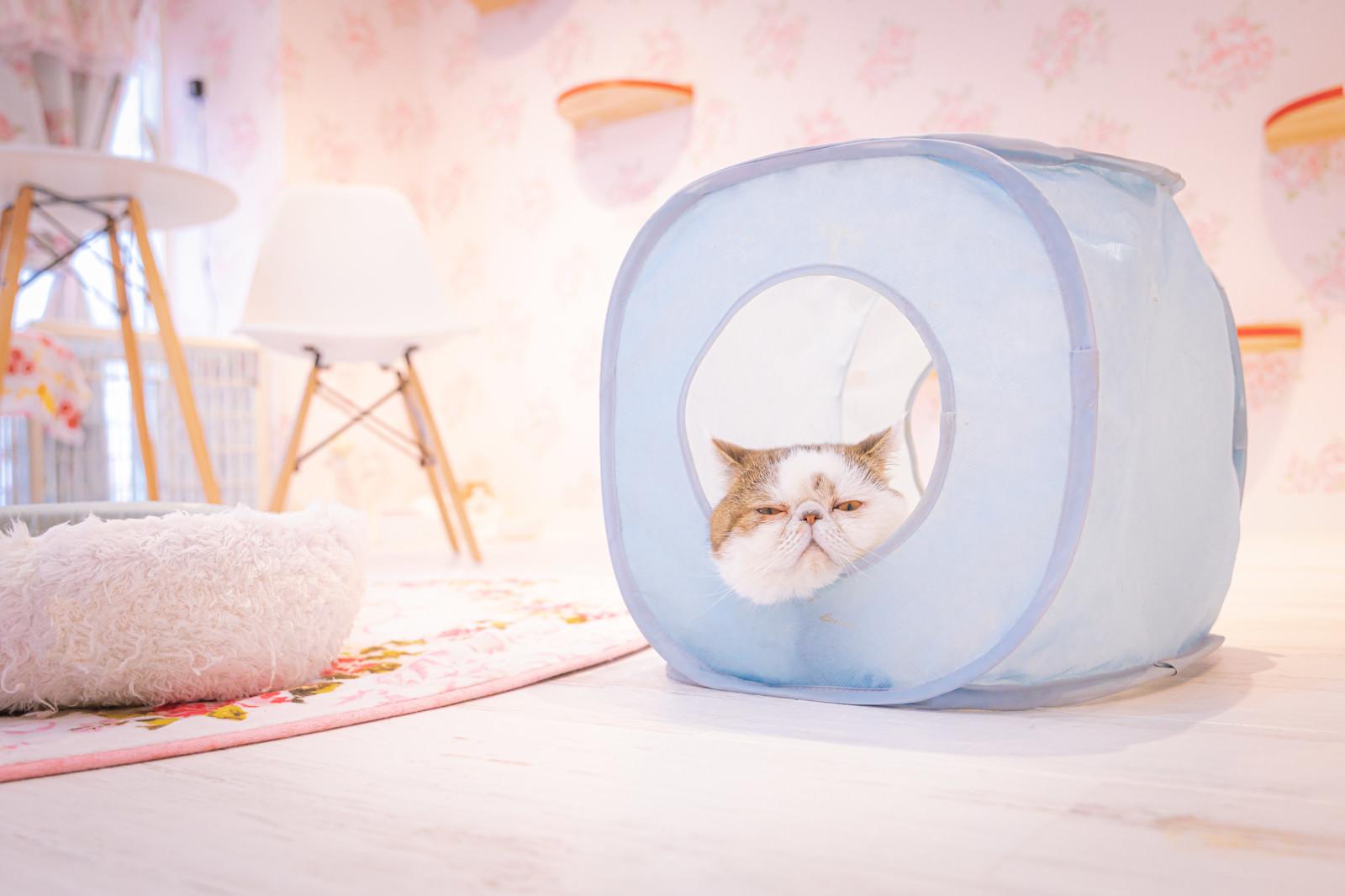 「出番になったら呼んでねと言わんばかりの大御所猫」の写真