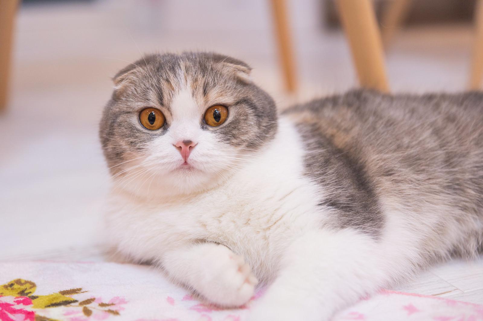 「目を見開く猫ちゃん」の写真