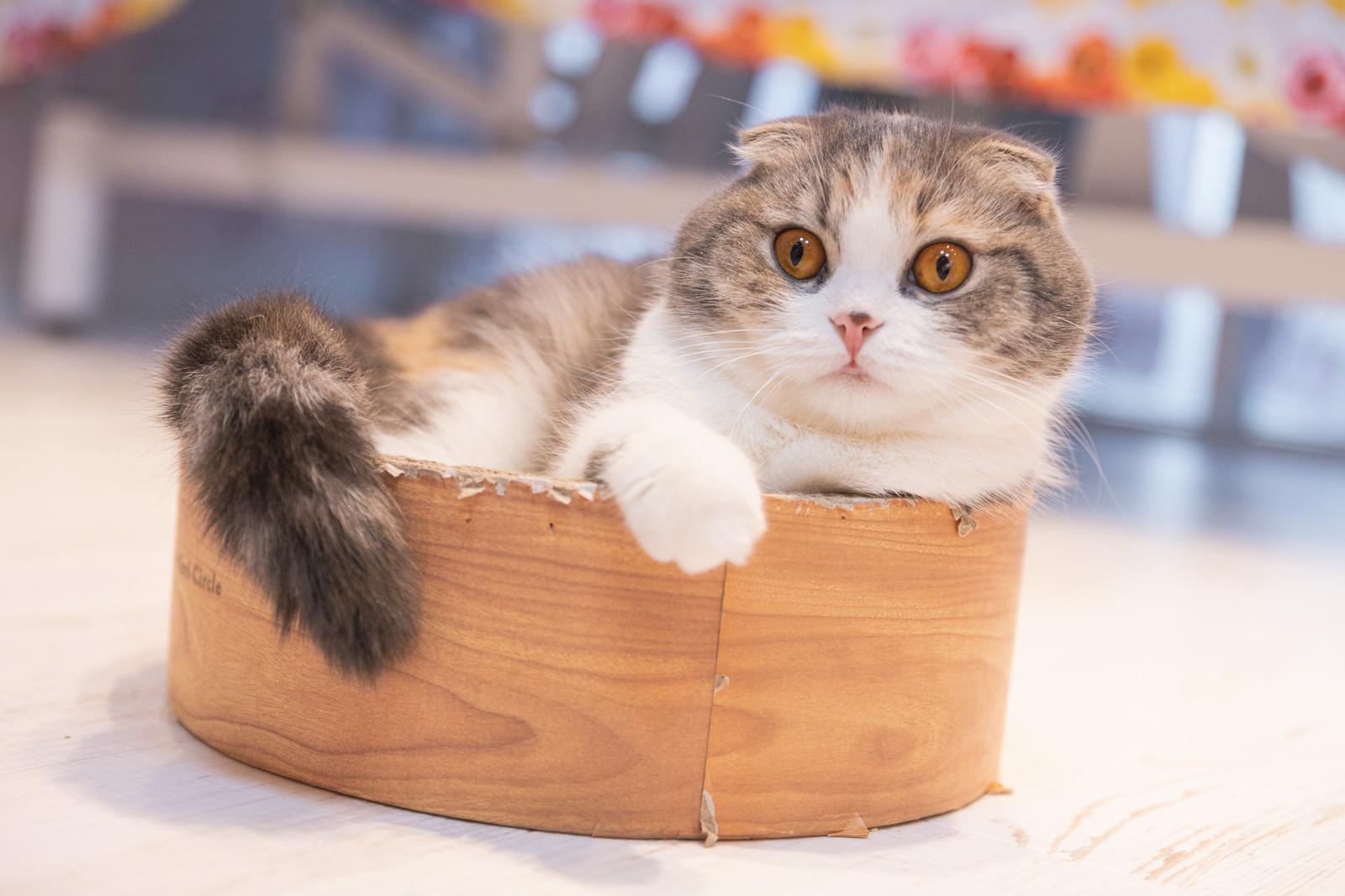 「都市伝説を真に受けるタイプ(猫)」の写真