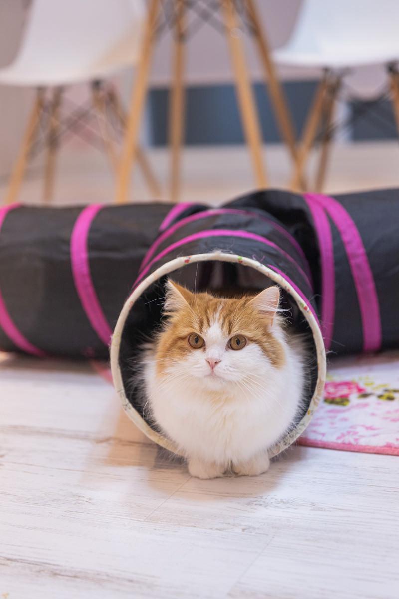 「猫トンネルからこんにちは」の写真