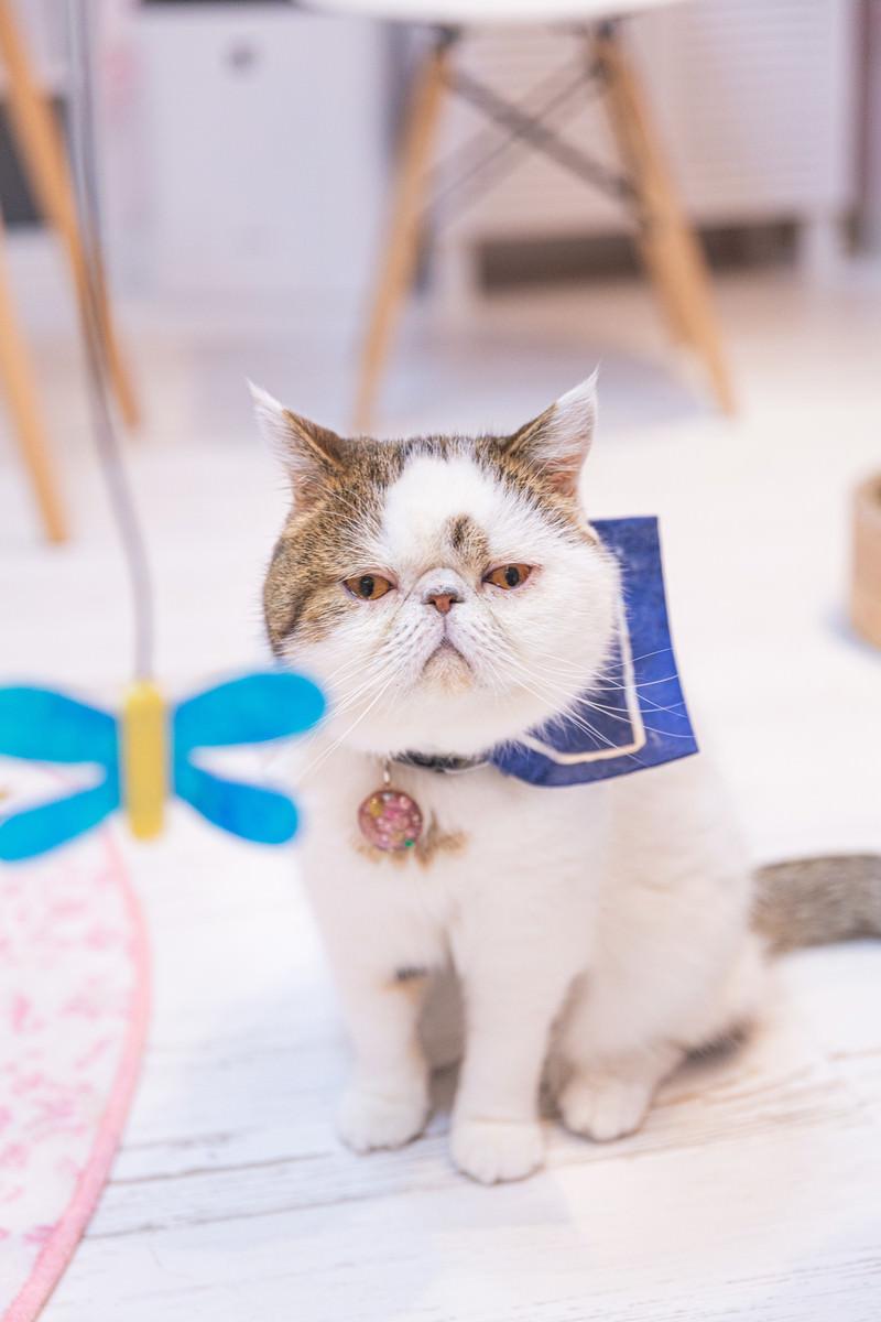 「おもちゃにまるで無関心の猫wwwww」の写真