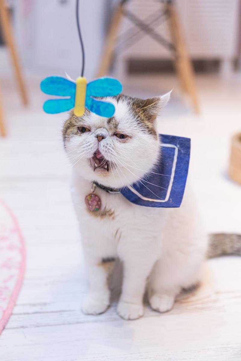 「あくびが出るほど退屈な猫」の写真