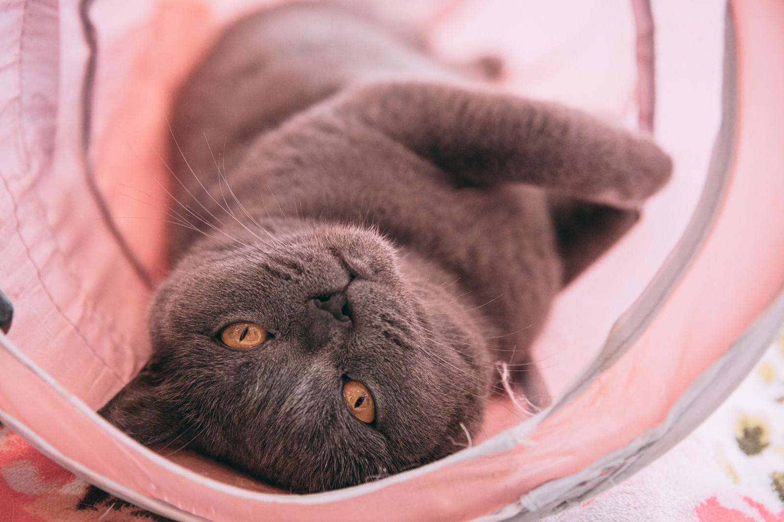 「それ、ストレスのない快適な環境でゴロ寝する猫の前でも同じこと言えんの?」の写真