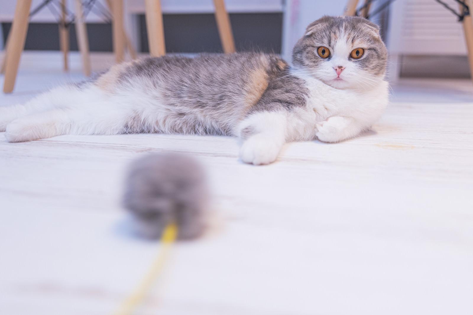 「思わず手が出る5秒前(猫)」の写真