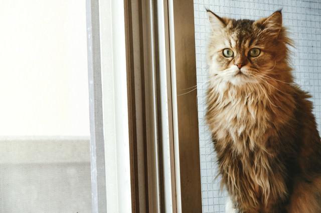 叱られるのを怖がる猫の写真