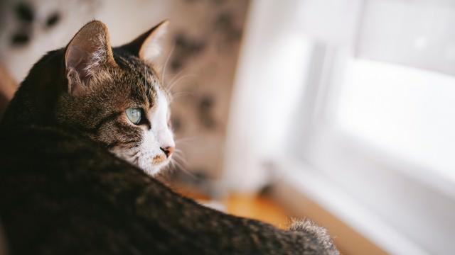 自然光の入る部屋で生活している猫の写真