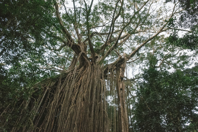 年月を感じる樹木の写真
