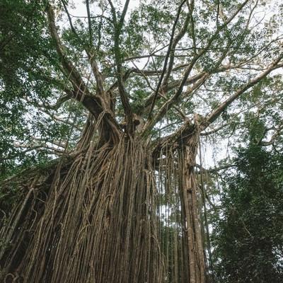「年月を感じる樹木」の写真素材