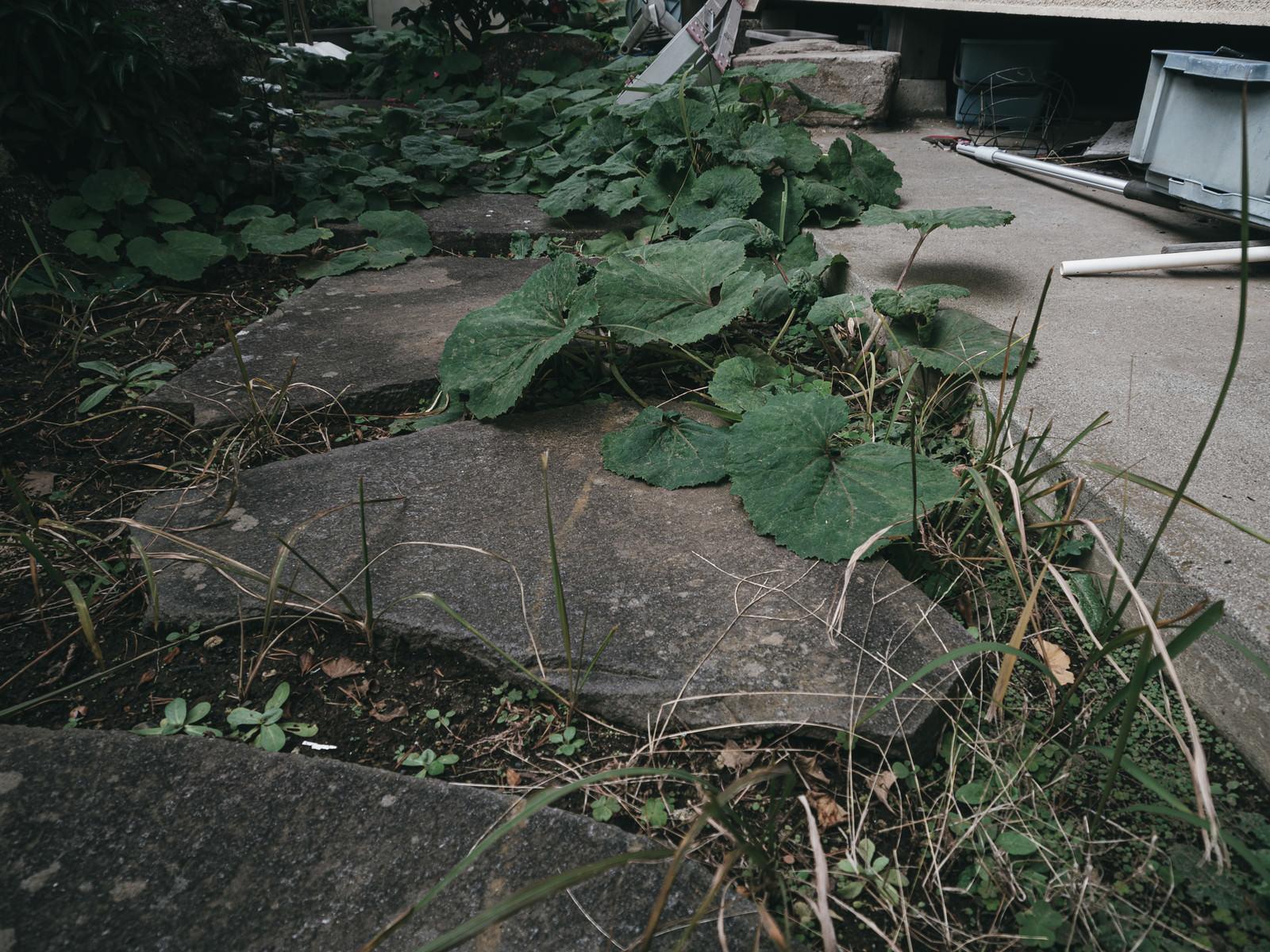 「雑草が生えた庭」の写真