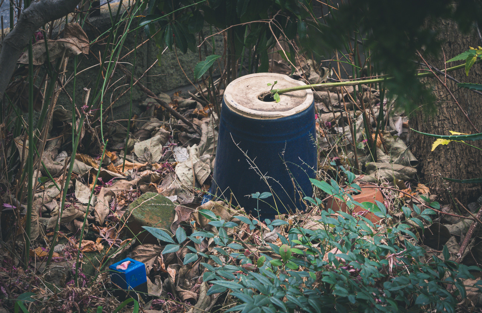 「手入れされないひっくり返った鉢」の写真