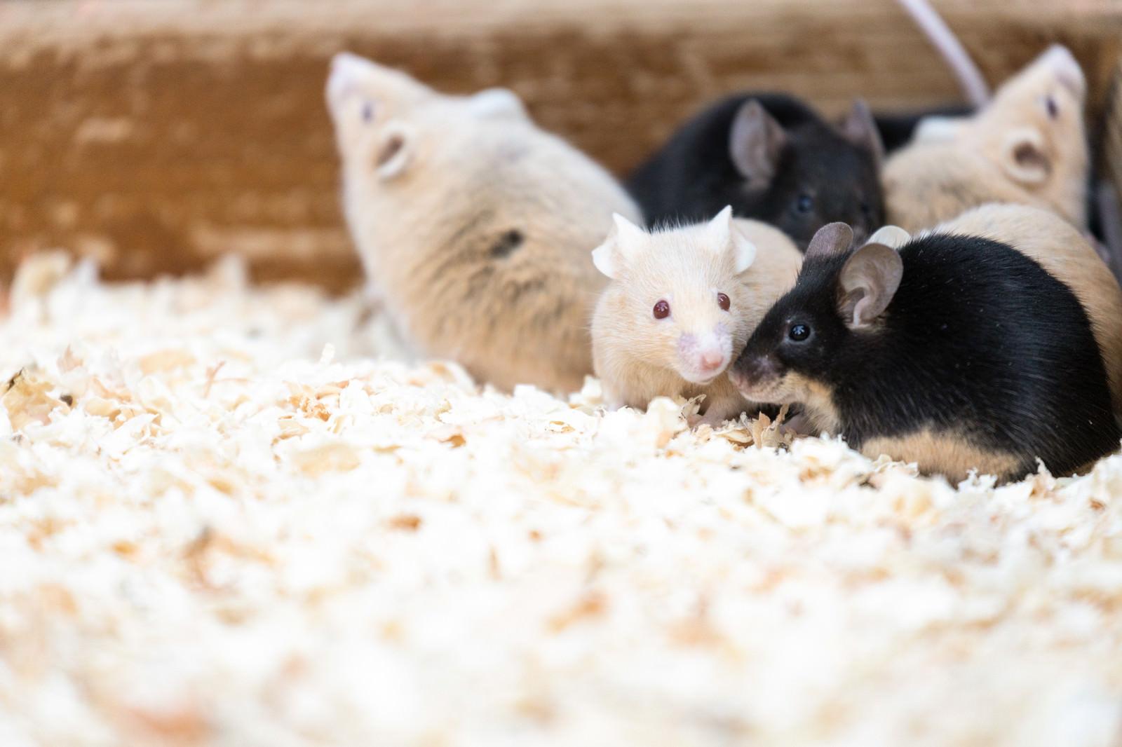 「隅っこに集まるネズミ達」の写真