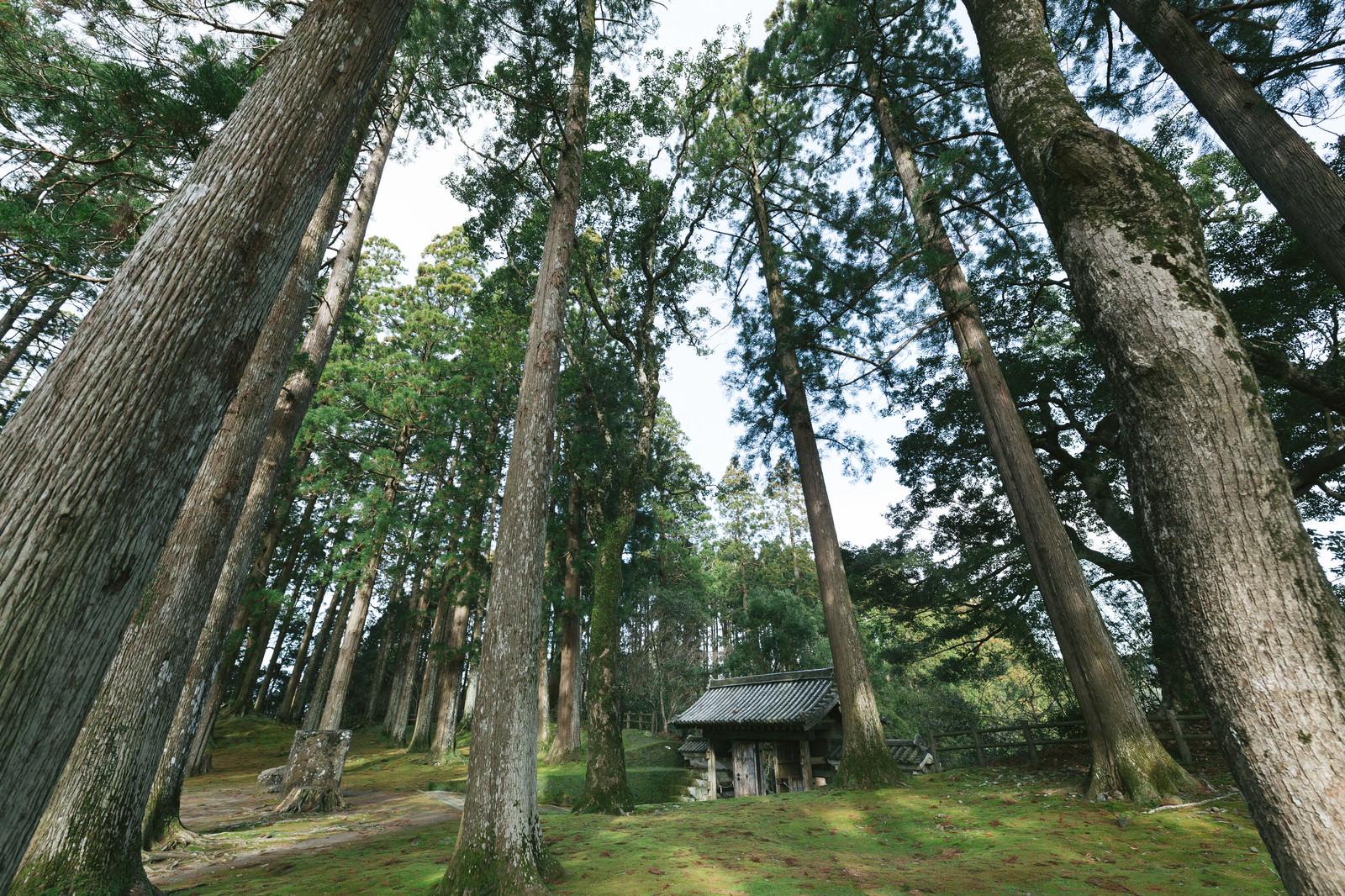 「飫肥城本丸跡にそびえ立つ飫肥杉と飫肥城裏門」の写真