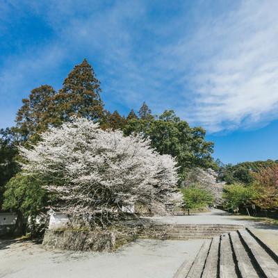 「飫肥城内の歴史感じる桜」の写真素材