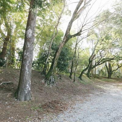 飫肥城の土塁の跡の写真