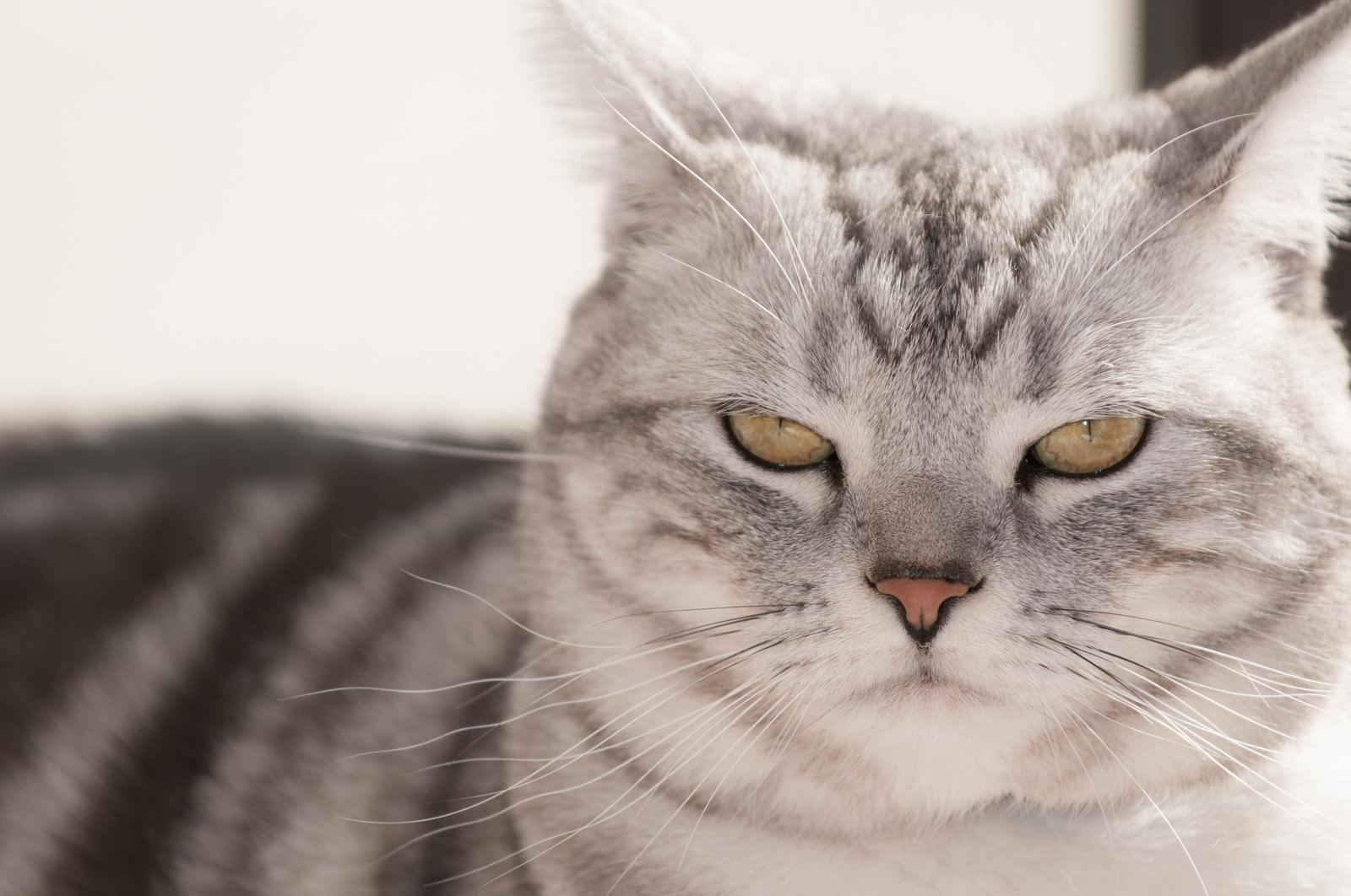 「示談の条件を言い渡す猫 | 写真の無料素材・フリー素材 - ぱくたそ」の写真
