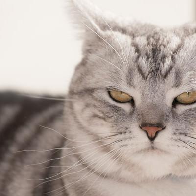 示談の条件を言い渡す猫の写真