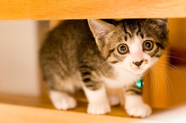瞳がうるんだ子猫