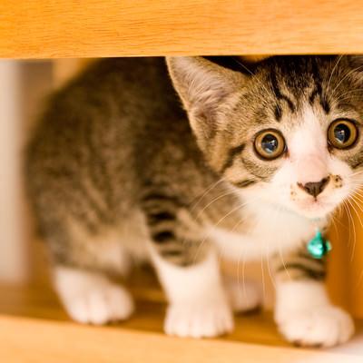 瞳がうるんだ子猫の写真