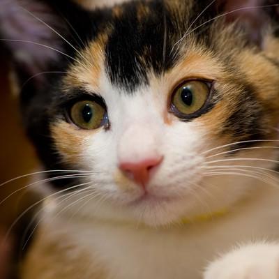 おまえは何を言っているんだ(猫)の写真