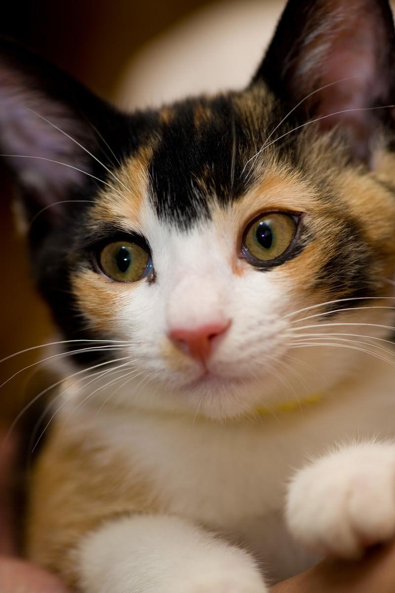 「おまえは何を言っているんだ(猫)おまえは何を言っているんだ(猫)」のフリー写真素材を拡大