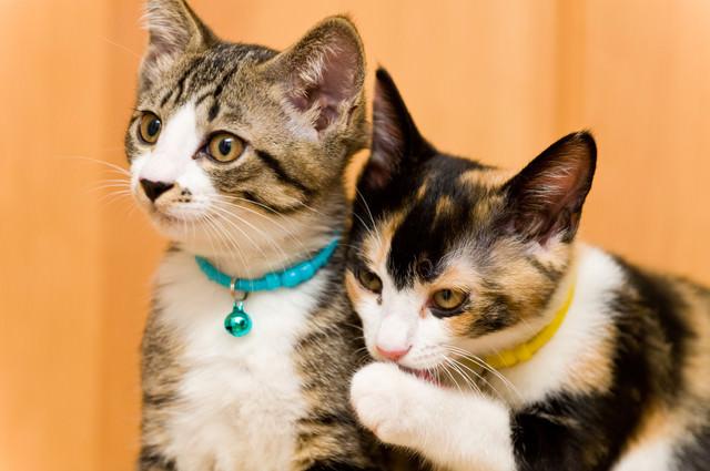 悪知恵を吹き込む猫の写真