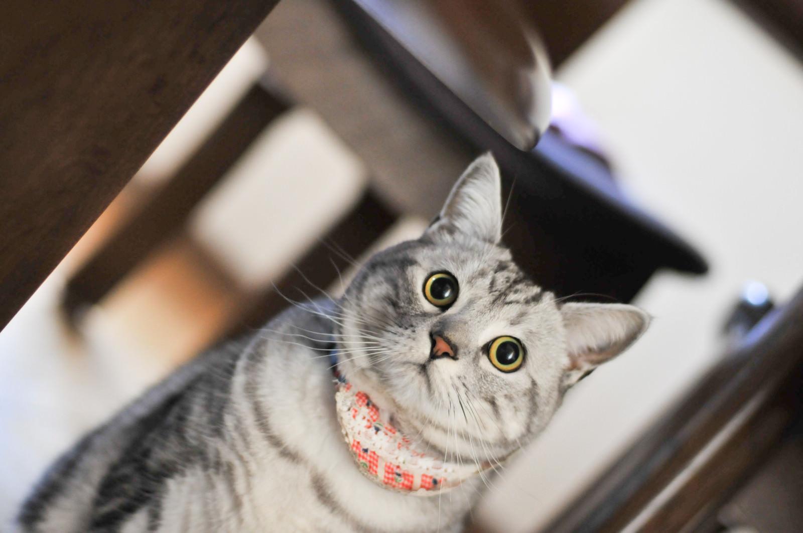 「硬直する猫ちゃん硬直する猫ちゃん」のフリー写真素材を拡大
