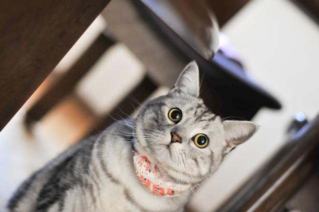 硬直する猫ちゃんの写真
