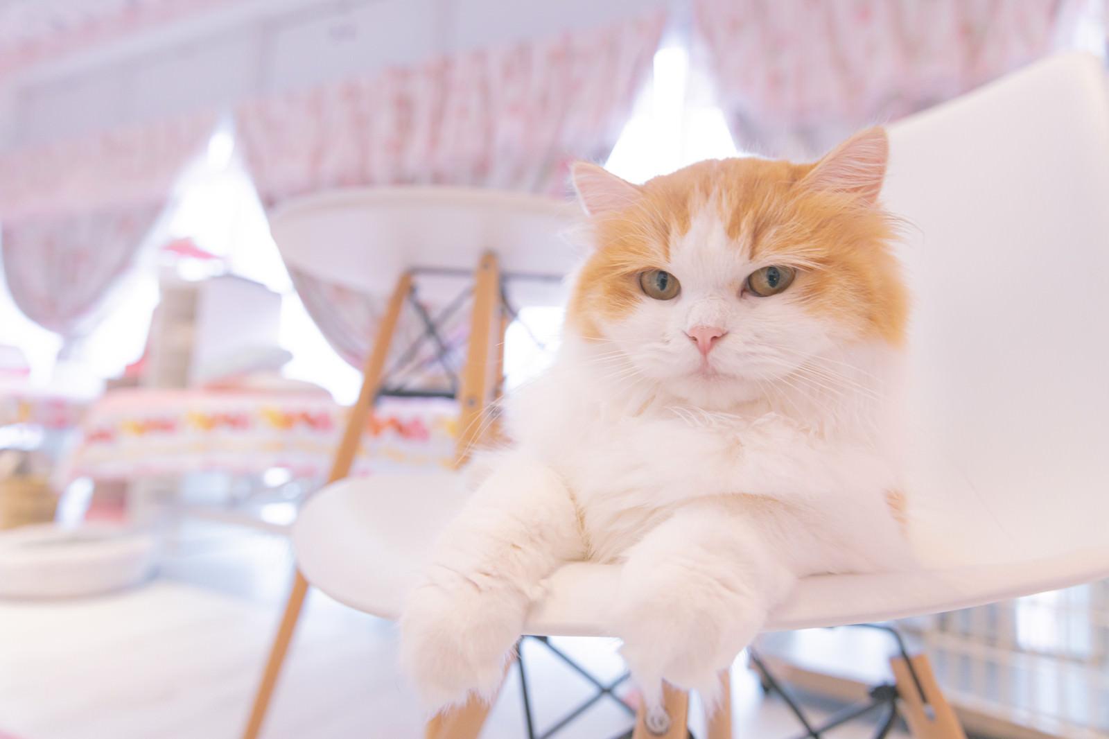 「御用でしょうか?(猫)」の写真