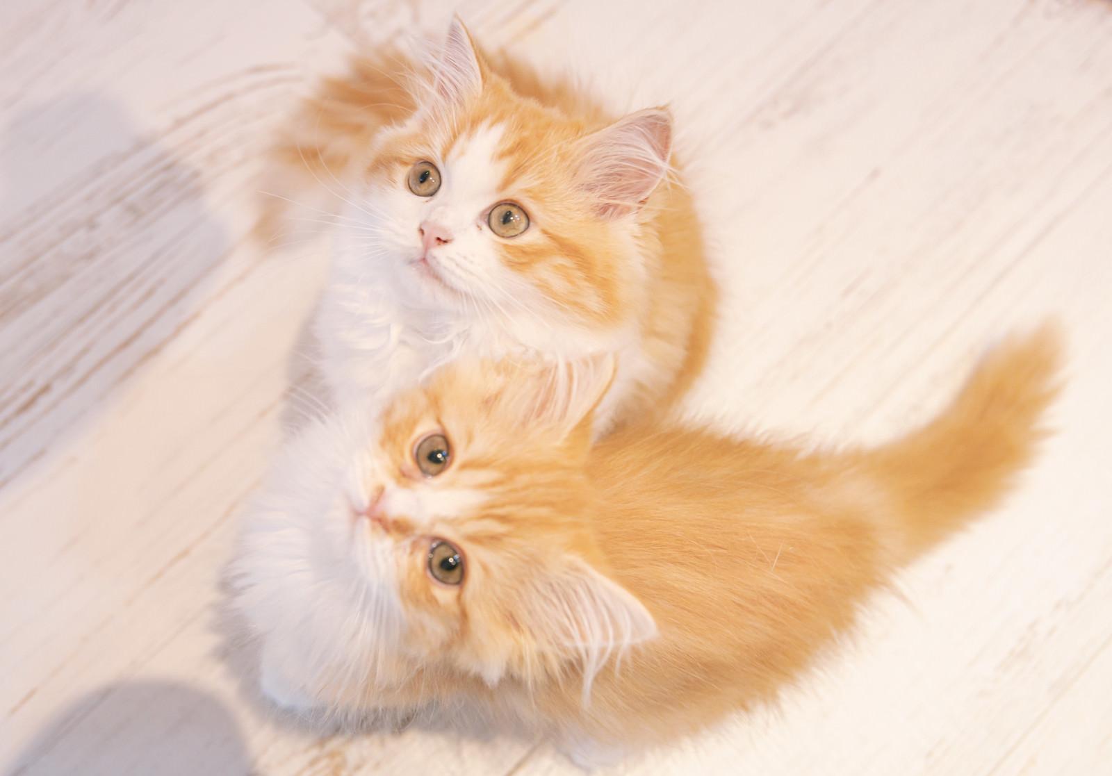 「上を見上げる子猫2匹」の写真
