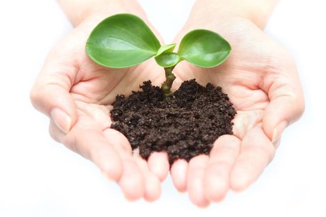 両手で苗を持つ手(地球環境)の写真