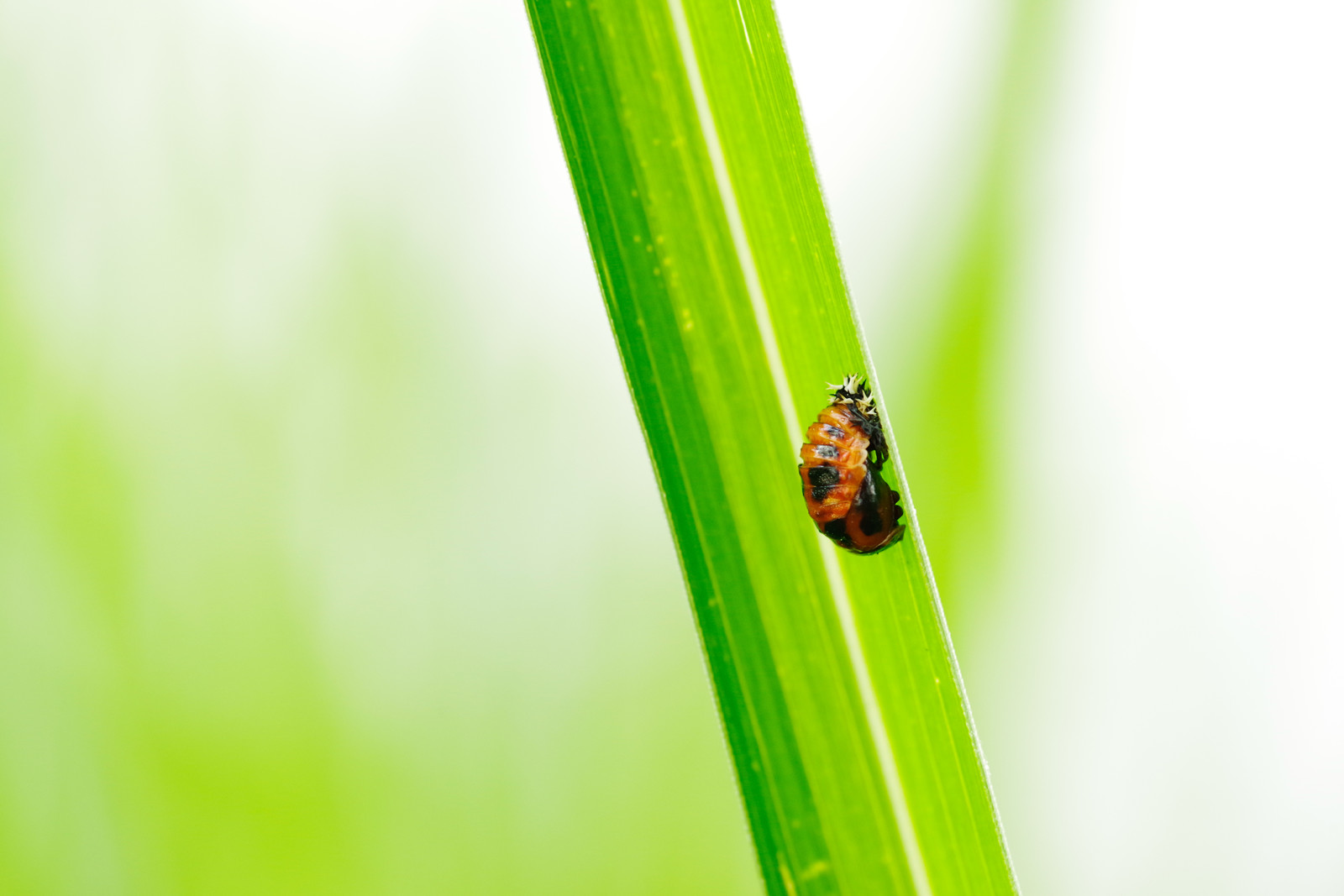 「茎をよじ登るしわしわしたてんとう虫」の写真