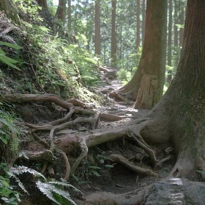 朝日に照らされる登山道の写真