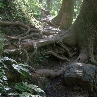 朝日に照らされる登山道(縦)の写真
