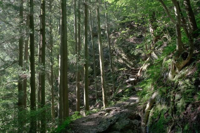 光が差し込む森の道の写真