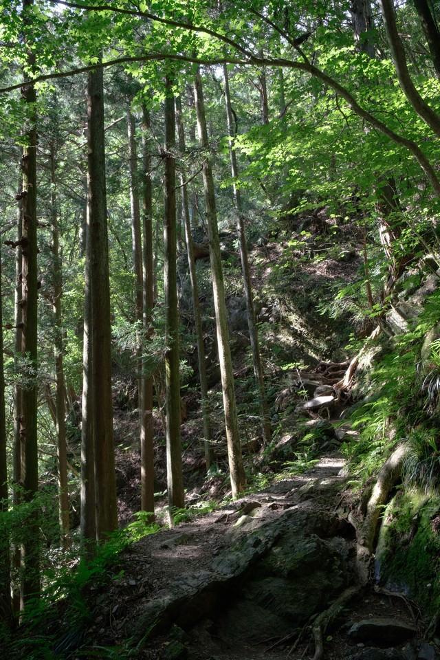 木々と光が差し込む森の道の写真