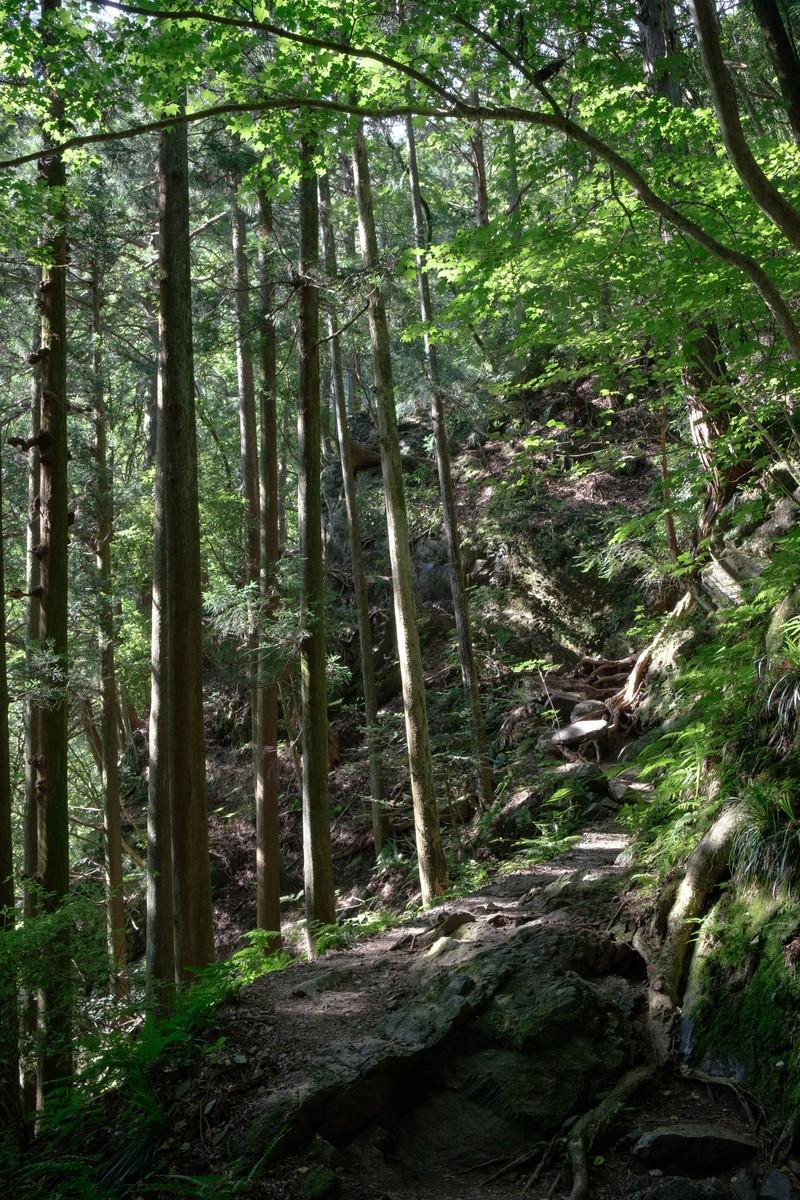 「木々と光が差し込む森の道」の写真