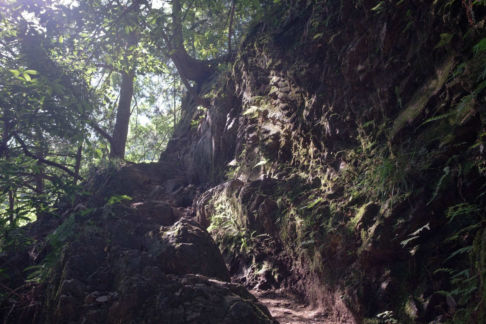 「光溢れる白谷沢登山道」の写真