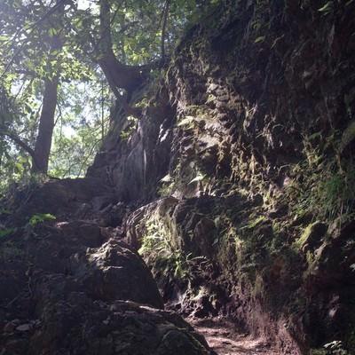 光溢れる白谷沢登山道の写真