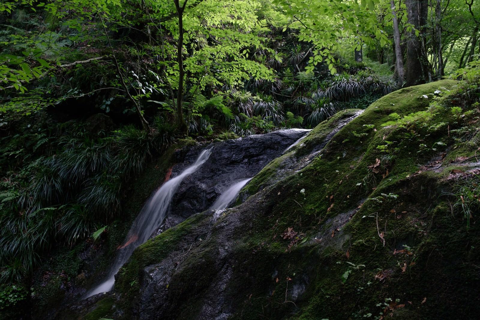 「緑鮮やかな棒ノ嶺・藤懸の滝」の写真