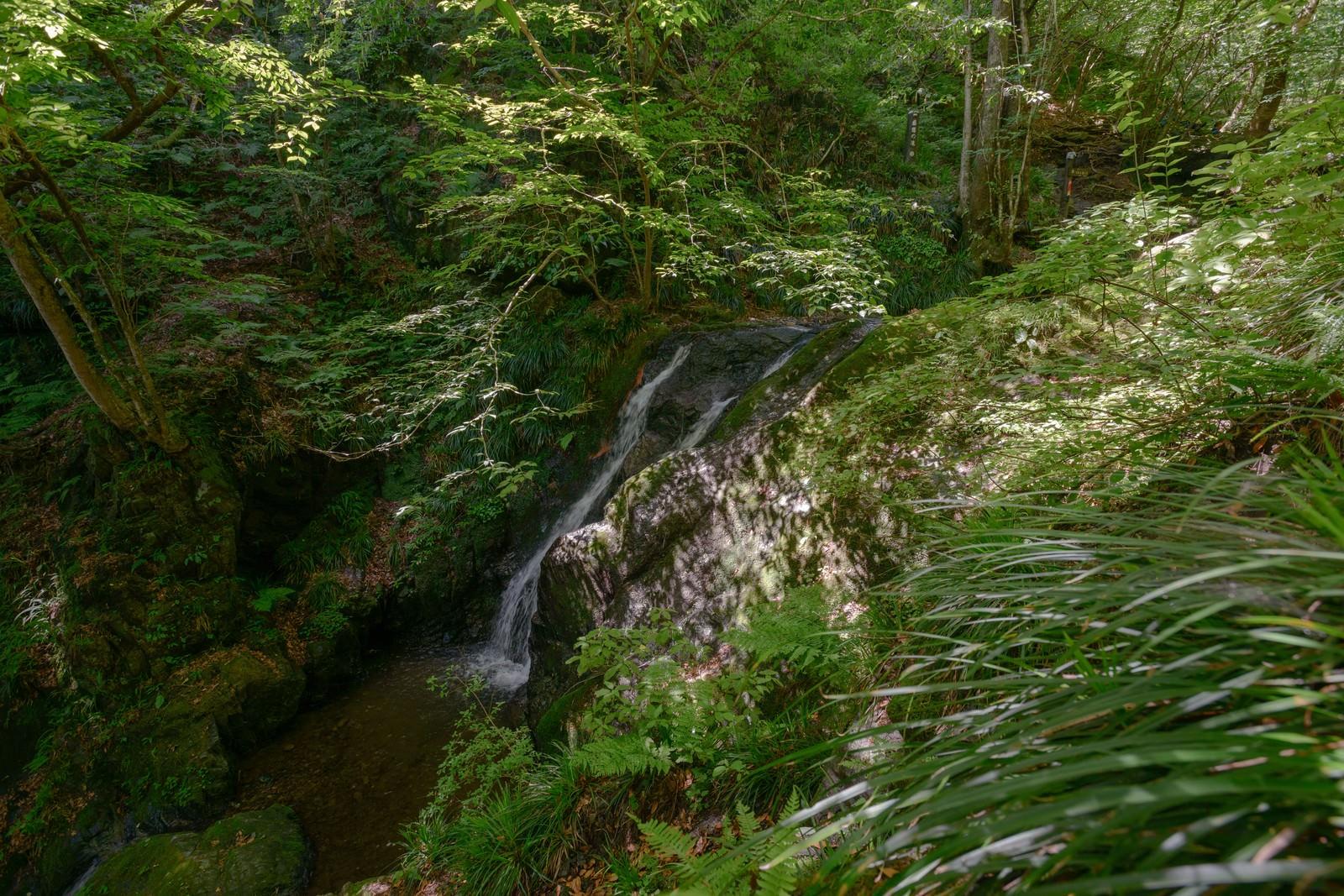 「新緑に覆われた藤懸の滝」の写真