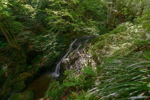 新緑に覆われた藤懸の滝の写真