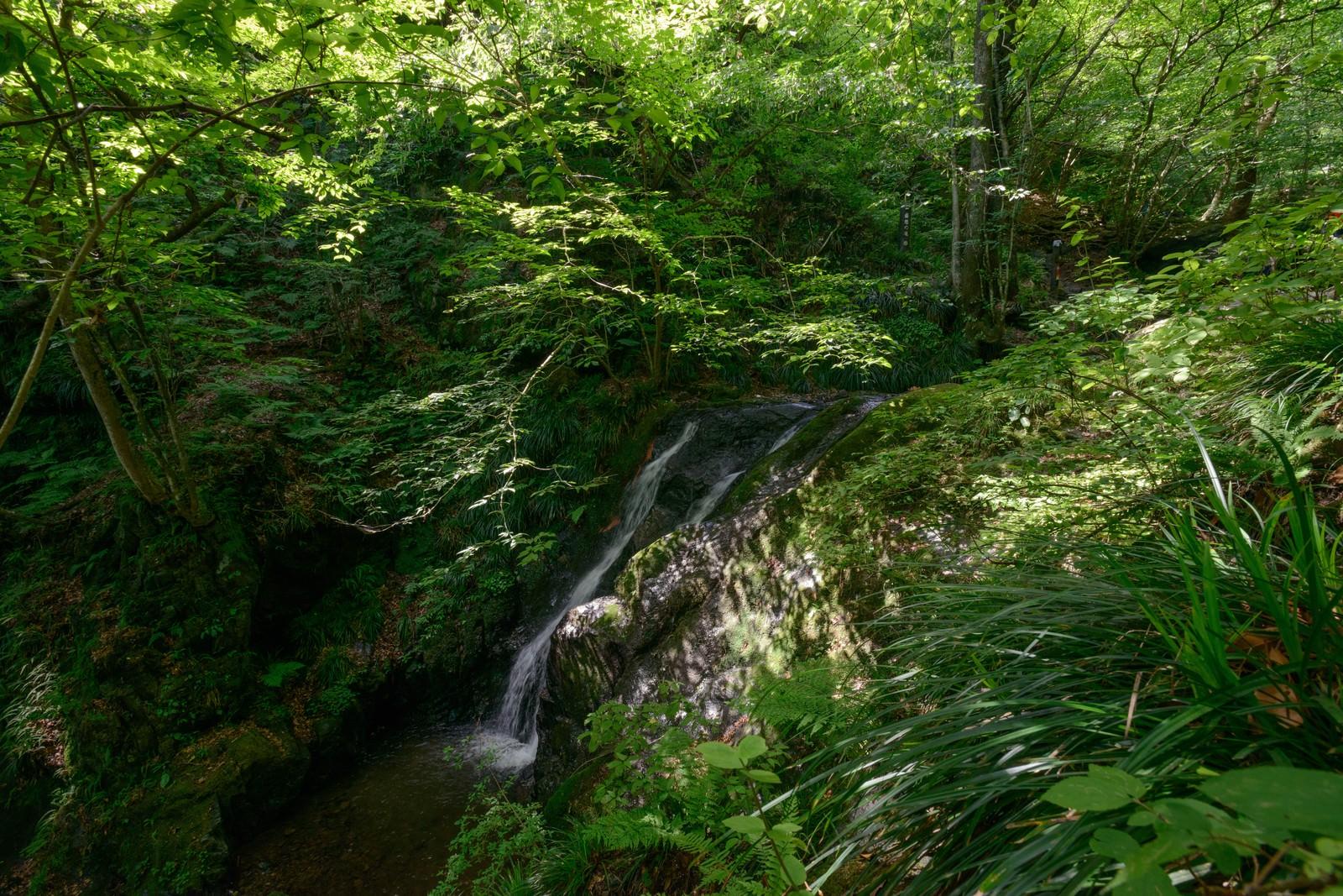 「木漏れ日が照らす藤懸の滝」の写真