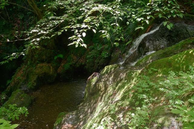 森の中の滝壺の写真